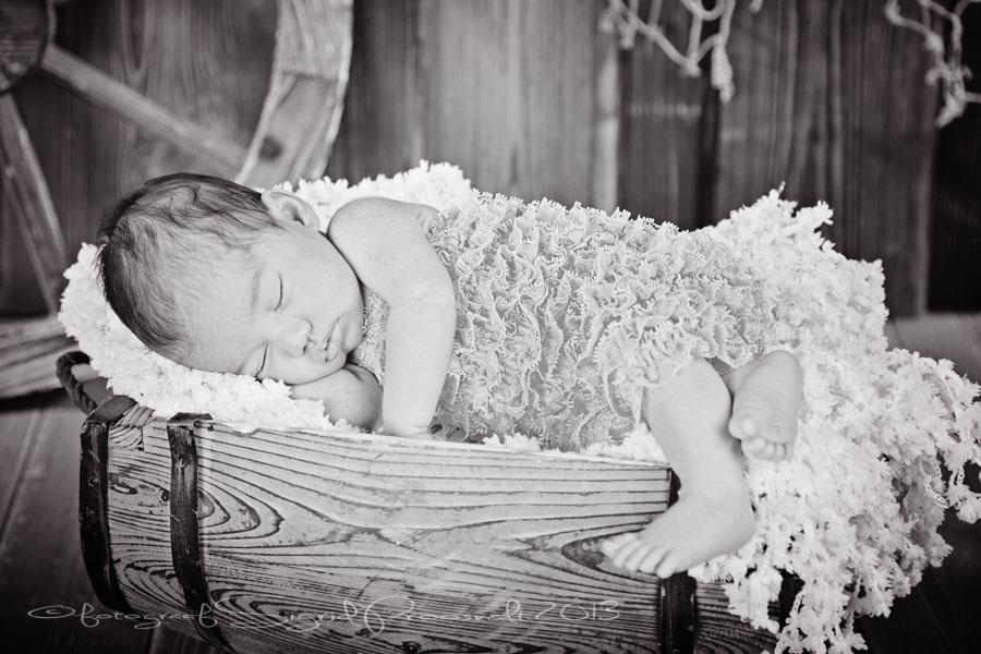 beebi-newborn-fotopesa