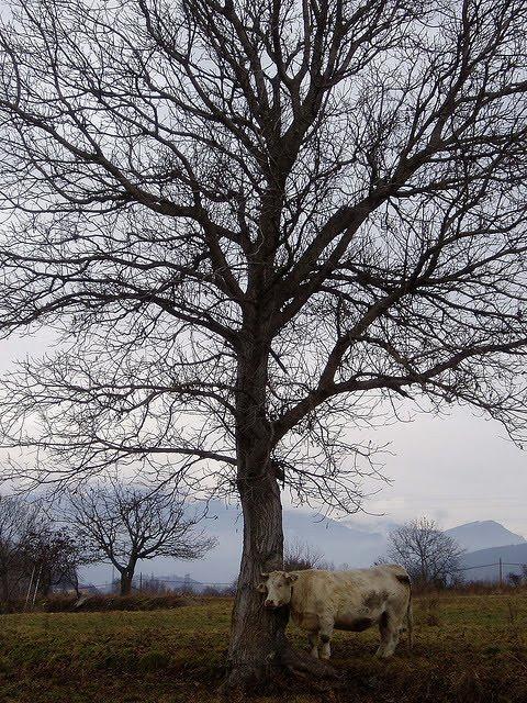 Amics arbres arbres amics a l 39 ombra del noguer - Vidres igualada ...