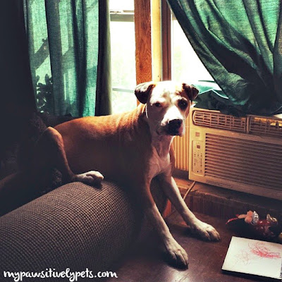 should you leave the ac running in your home for your pets. Black Bedroom Furniture Sets. Home Design Ideas
