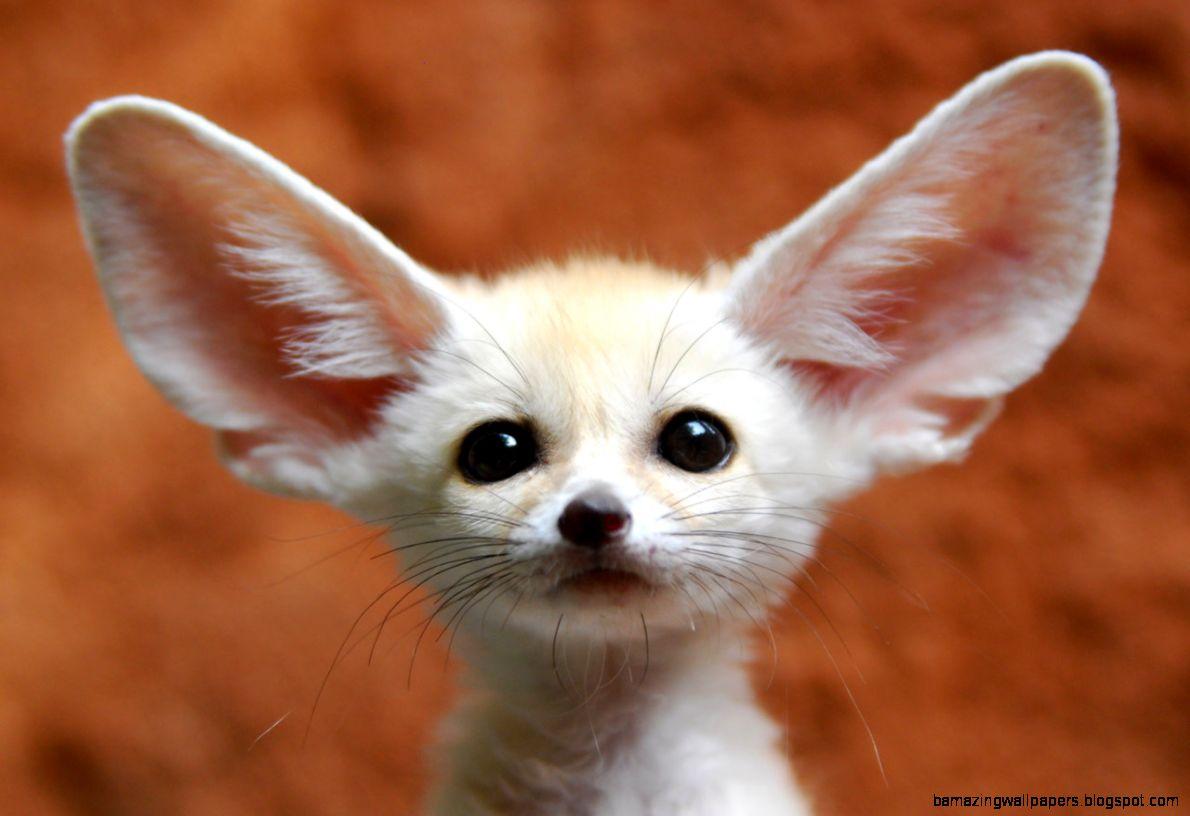 Cute Exotic Animals   Wild Animal Live