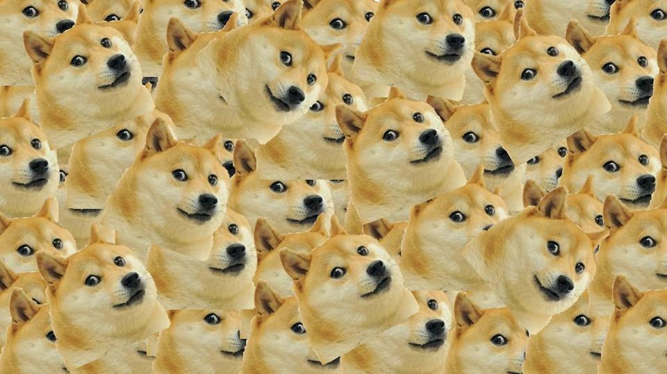 So+much+doge+_2ec24532e24abb4835551a2f6d29116c.jpg