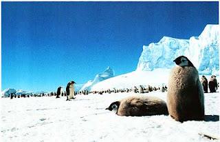 Колония пингвинов, Антарктика
