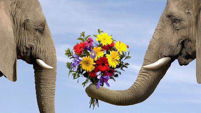 Love of  Elephant