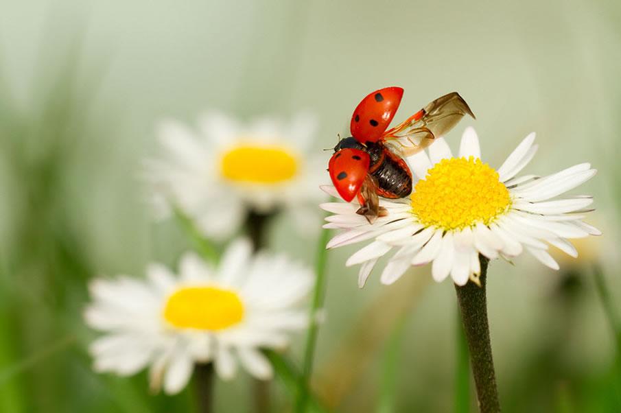 en g%C3%BCzel masa%C3%BCst%C3%BC resimler+%282%29 2012 Yılının En Güzel Masaüstü Resimleri   Jenerik Fotoğraflar