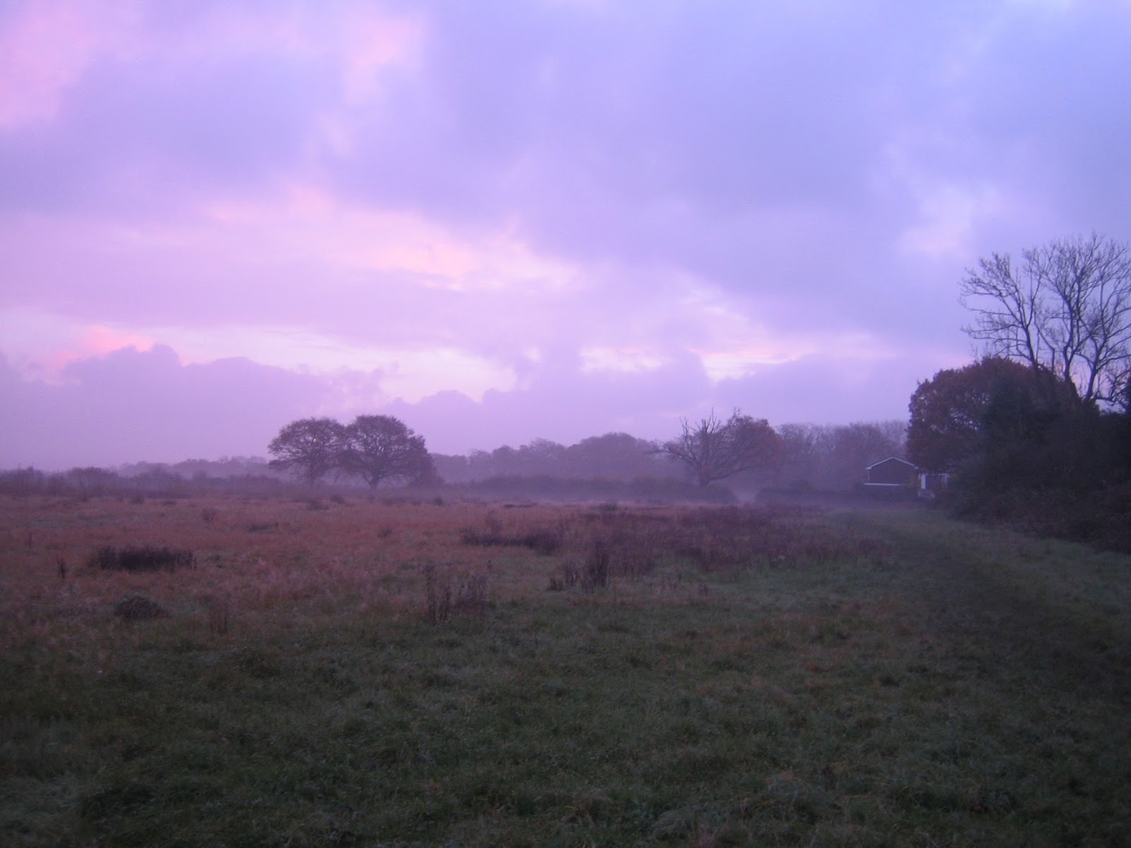 Friars Oak Fields at dawn 2