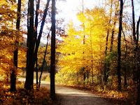 Meacham grove