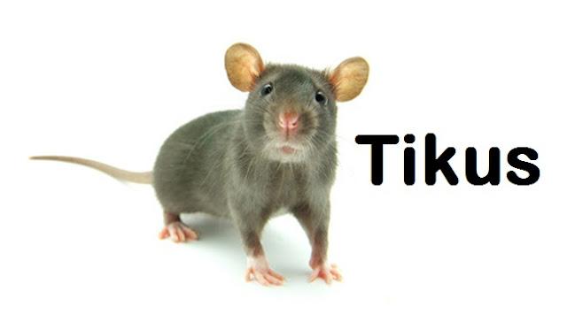 Cara Berkesan Menghalau Dan Membasmi Tikus
