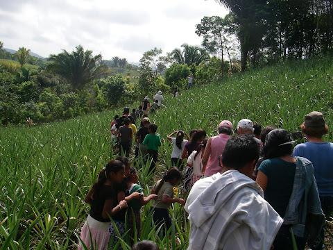 Le groupe était impressionnant dans les champs d'ananas.
