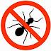 Cara Mengusir Serangga di Rumah