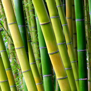 how to kill bamboo roots with vinegar