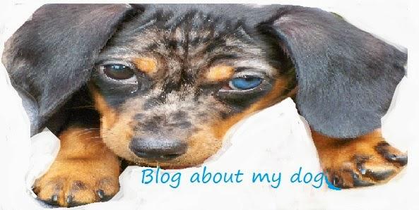 blogaboutmydog.blogspot.com