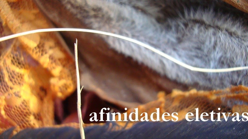 afinidades eletivas
