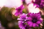 Eu Amo Flores (Ganhar Flores)