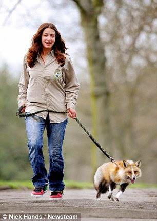 ايما تتمشى مع الثعلب