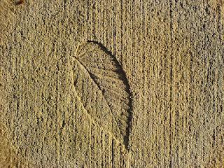 leaf in concrete, Penn state deike building