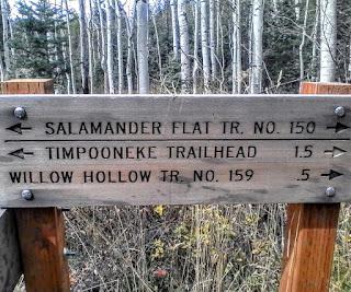 hike utah county, hiking in utah county, hiking american fork canyon, trails, salamander flats