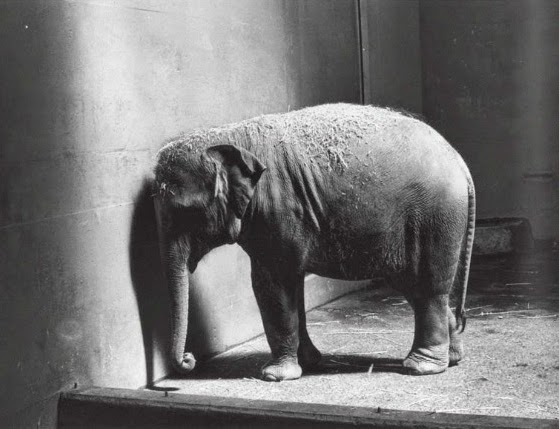 Adbusters: The Eveready Elephant is at the wall.
