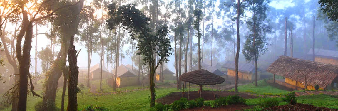 honeymoon in kerala, honeymoon in tree house, tree house honeymoon packages in munnar, best discounts for nature zone resort munnar