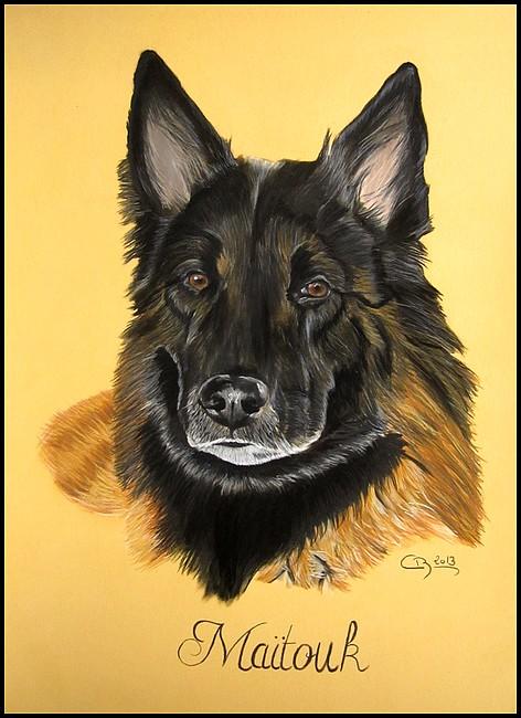 Portrait berger belge