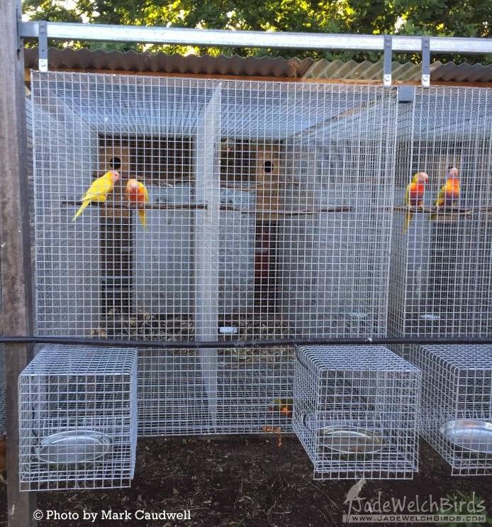 wire water stations mark caudwell scrap wire jadewelchbirds.com jade welch