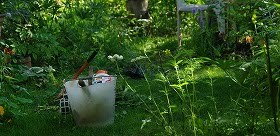 オープンガーデンの庭