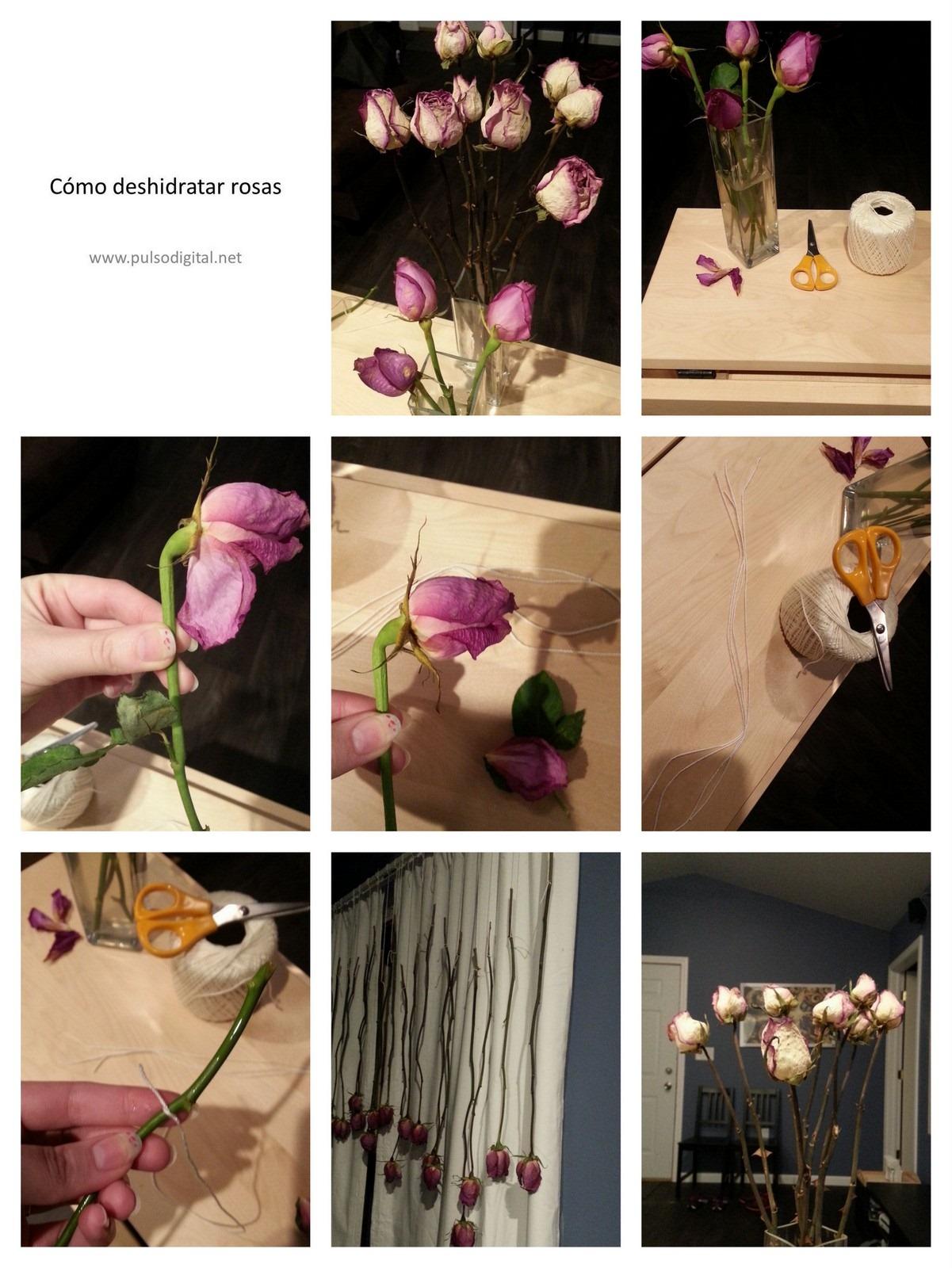 Cómo deshidratar rosas