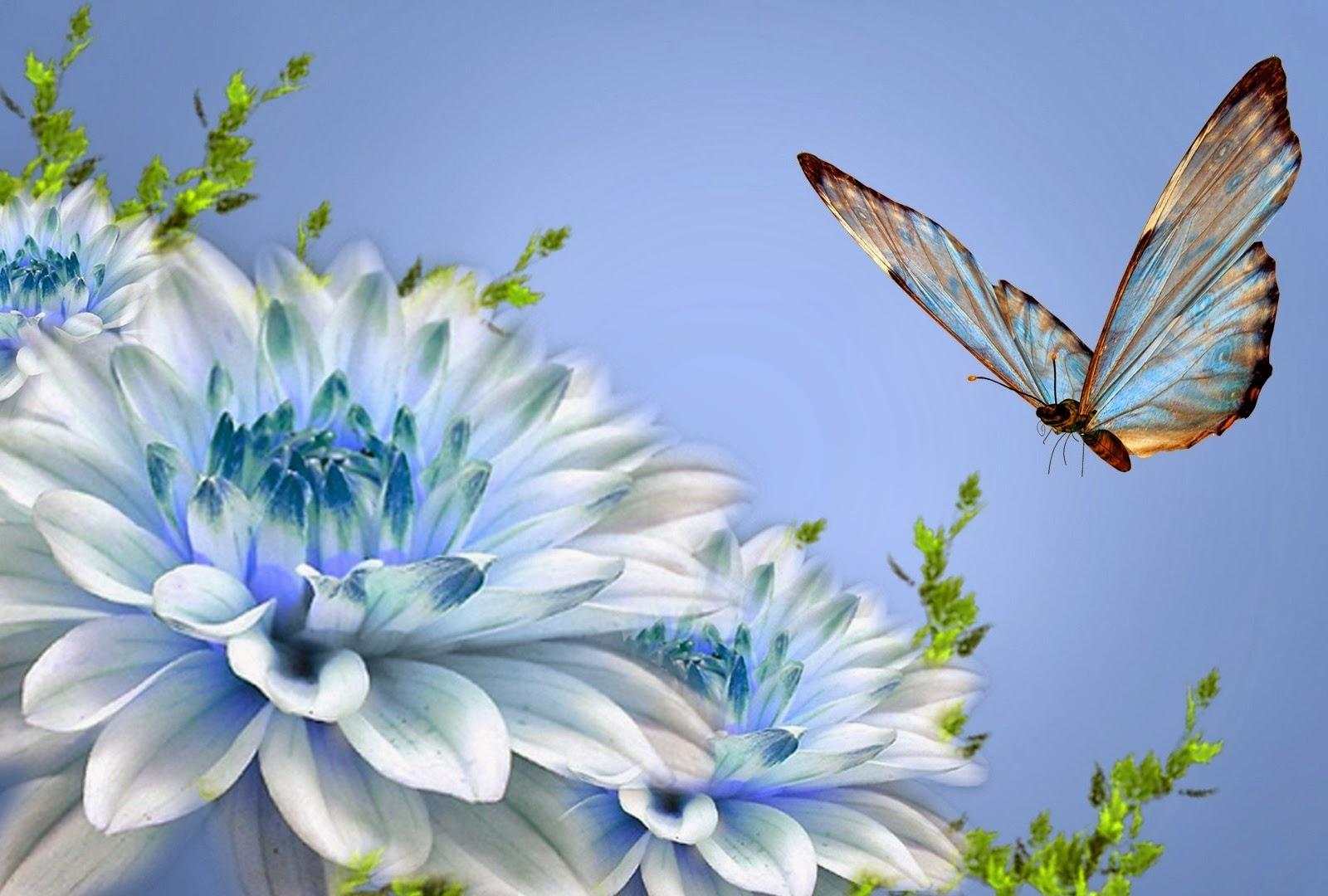 wallpaper islamic informatin site: nature wallpaper for desktop