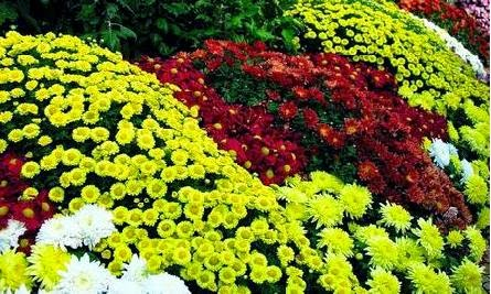 Types of ornamental plants for the garden