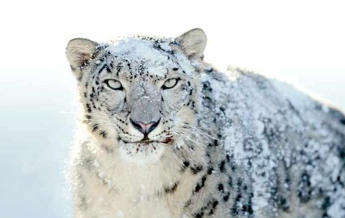 mac os x snow leopard download iso