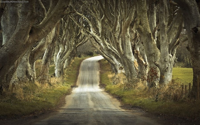 15. Dark Hedges by marek biegalski