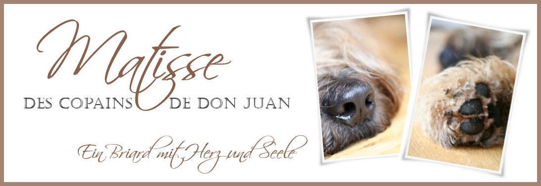 Matisse des Copains de Don Juan
