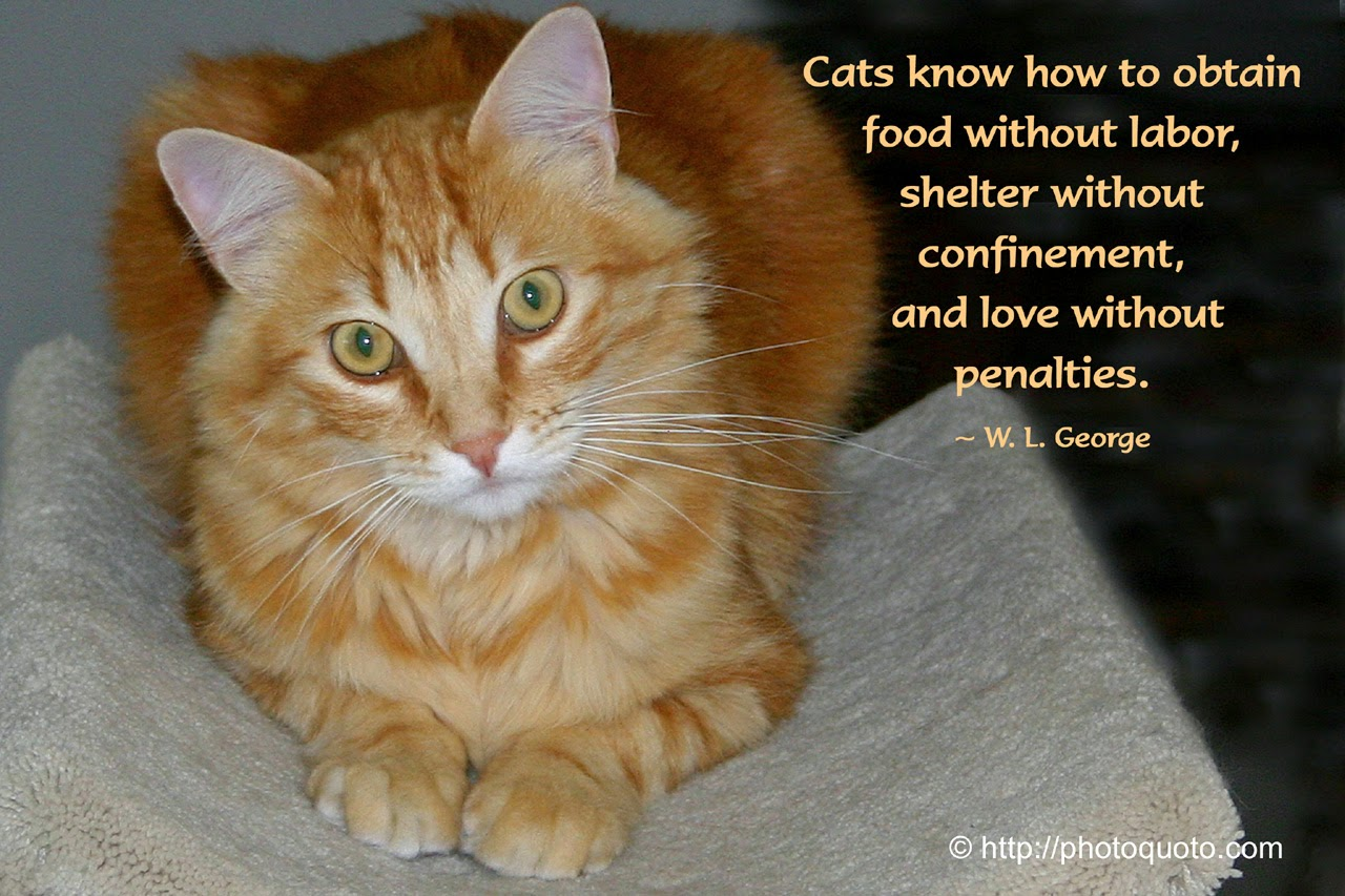 Unconditional Love Cat Rescue