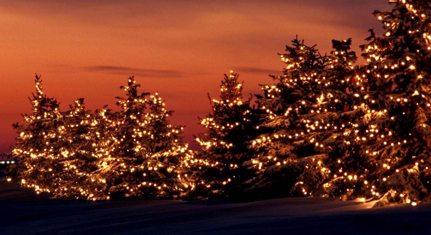 Christmas Beauty Tree Winter Light Backgrounds   Wallpaper