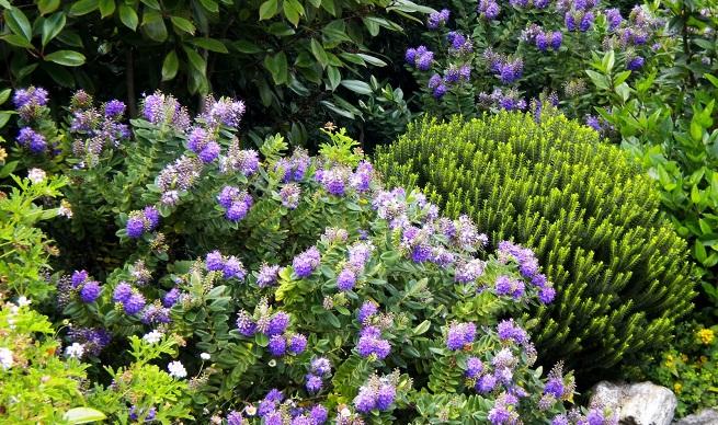 Arte y jardiner a el jard n en macetas for Arbustos perennes para jardin