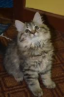 kucing perantauan.hehe:)