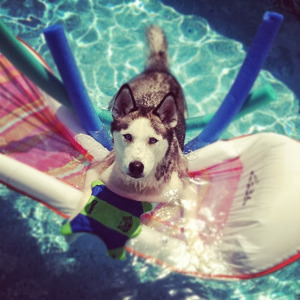 adorable dog pictures, husky dog playing in pool