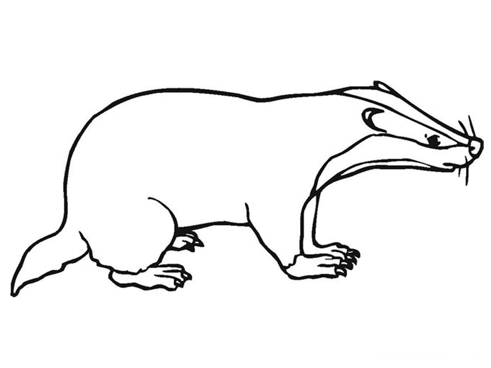 coloring pages badgers - photo#6