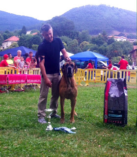 Best in Show - Absoluto