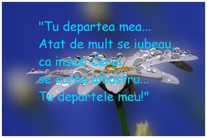 Floare-albastra,nu cata in departare fericirea ta...