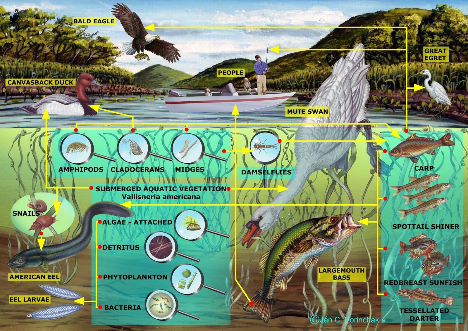 Learn_for_Knowledge: River Habitat (Riparian Habitat)