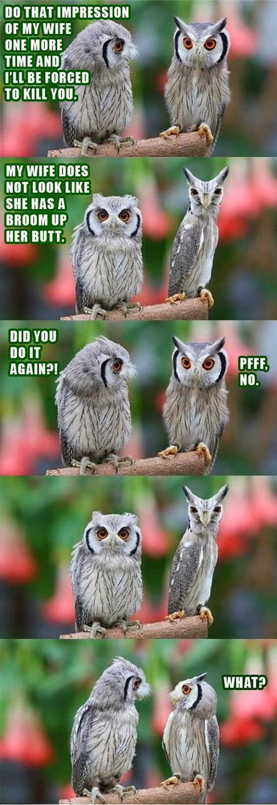 30 Funny animal captions - part 21 (30 pics), captioned animal pictures, owls