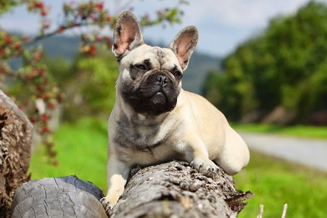Wiosenna-pielęgnacja-psa