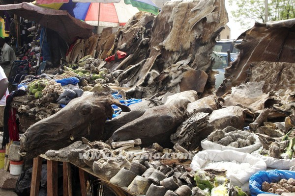 SEJUMLAH tengkorak haiwan yang dijual di sebuah pasar di Bamako pada Sabtu lalu.