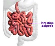Colitis ulcerativa inespecifica