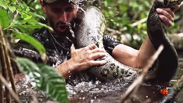 VIDEO – Tipo se dejará tragar por una anaconda