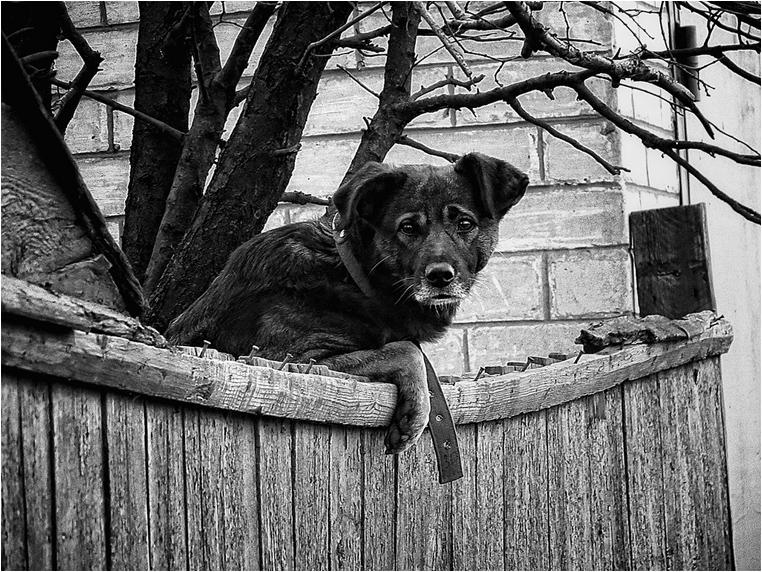 emphoka, photo of the day, Nadin Impressionable, Canon PowerShot SX40 HS