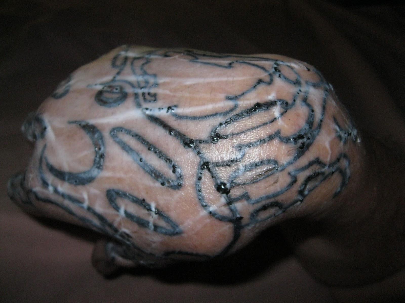 Blue ringed octopus tattoo james bond - photo#20
