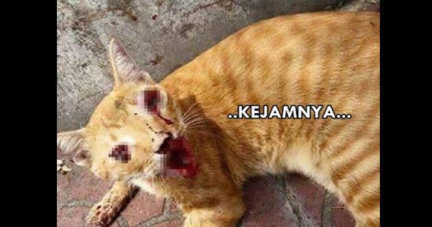 Gigi dicabut, mata kucing dikorek..KEJAMNYA...