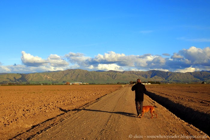 hubby walking Willow, my sister-in-laws dog on her farm, New Zealand