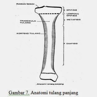 Anatomi tulang panjang